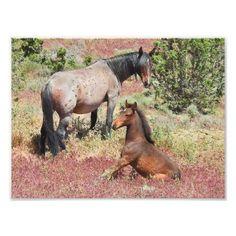 Wildlife print wild horses Nevada mustangs Photo Print - horse animal horses riding freedom