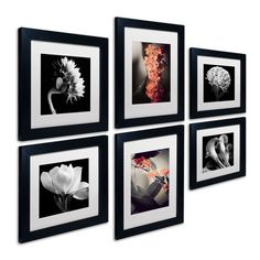 Trademark Fine Art Floral 6 Piece Framed Photographic Print Art Set