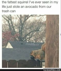 This just left me laughing in confusion looking at this 😂 Laugh Out Loud, Hilarious Pictures, Funny Animal Pictures, Funny Images, Funny Photos, Funniest Photos, Pet Pictures, Funny Things, Funny Stuff