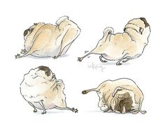 Four Pug Poses!