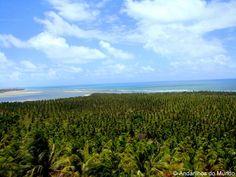 Vista do Mirante da Praia do Gunga em Alagoas - Mar de coqueiros