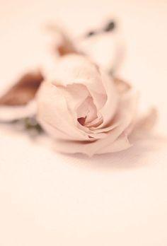 pretty rose....S7of9