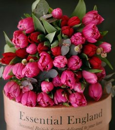 Good evening Ladies. Tonight lets pin fuchsia flowers. Either with black or green or alone. Should be a vibrant board. Happy pinning. .