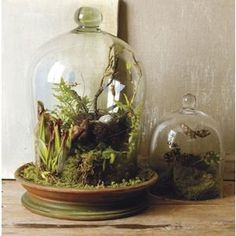 I love these living gardens under cloches / bell jars