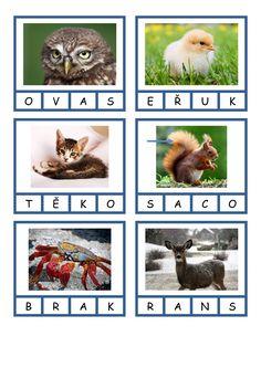 thumb School, Animals, Animales, Animaux, Animal, Animais