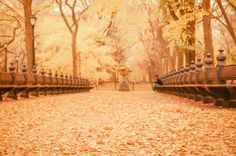 Poster | AUTUMN - NEW YORK CITY von Vivienne Gucwa | more posters at http://moreposter.de