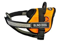 Dean and Tyler 34 to 47-Inch 'Blind Dog' Pet Harness with Padded Reflective Chest Straps, Large, Orange/Black ** Click image for more details. (This is an affiliate link and I receive a commission for the sales)