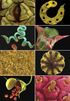 Seeds under the microscope.