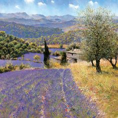 La Provence John Donaldson Lavender fields in the Luberon between Mont Ventoux and the Durance valley, to the north of Aix-en-Provence... Oil giclée