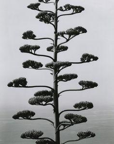 Brett Weston, Portugal 1960