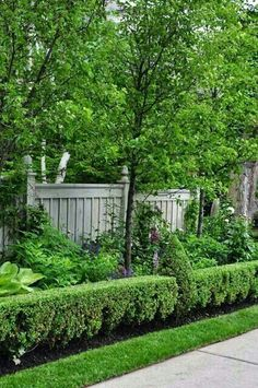 A little heading and a garden goes from cottage to pretty formal.