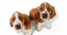 Kanine owners can save up to £210 a year by looking our for certain elements of dog food