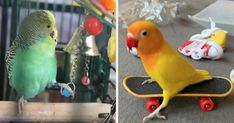 20 Things From Amazon That'll Help Your Bird Get More Exercise - BuzzFeed delivers news and entertainment to hundreds of millions of people around the world. Find the latest in cute and fun content and quizzes on the web.  IMAGES, GIF, ANIMATED GIF, WALLPAPER, STICKER FOR WHATSAPP & FACEBOOK