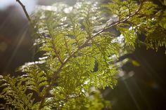 山岳写真家・杉村航さんに聞く、ちょっとしたコツで一味違う山の写真を撮る方法 - Funmee!![ファンミ―]