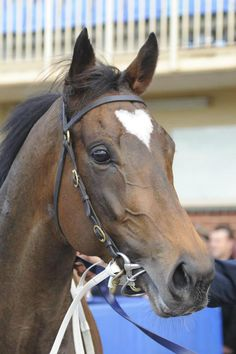 australianhorseracing:  Lankan Rupee out of Redoute's Choice has been noticed because of the perfect heart shape on his head. He won his fir...