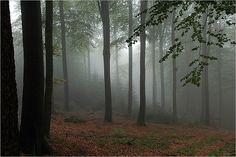 Trunks, Plants, Image, Woodland Forest, Mood, Autumn, Drift Wood, Tree Trunks, Plant
