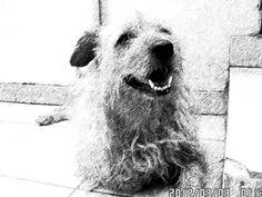 Meu cão!!!