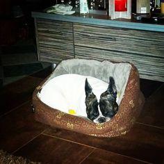 Sieh dir Instagram-Fotos und -Videos von Engelbert Bernadett (@szivarlany) an Laundry Basket, Videos, French Bulldog, Wicker, Instagram Posts, Pictures, French Bulldog Shedding, Bulldog Frances, Laundry Hamper