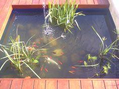 Pond, Aquarium, Deck, Fish, Fish Stand, Water Pond, Aquarius, Fish Tank, Front Porches
