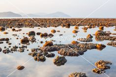 Exposed coral reef at low tide