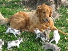 猫と犬の仲良し画像 03|ねこLatte+