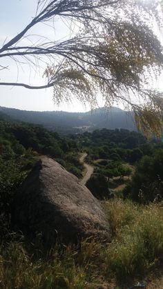 Árboles en el camino (1)