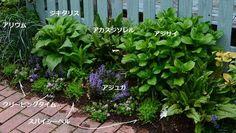 Green Garden, Green Plants, Garden Borders, Garden Paths, Plant Design, Garden Design, Diy And Crafts, Exterior, Landscape