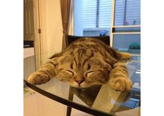 Gravity is too high for this cat..