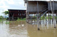 ducks - Inle Lake, Myanmar