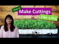 Step by step guide that teaches you how to make cuttings like a pro. We share our 5 top tips to succeed with making cuttings. Like A Pro, Cuttings, Horticulture, Free Ebooks, Infographic, Training, Make It Yourself, Youtube, Plants