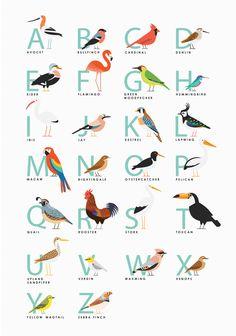 Fowl Alphabet print illustration obtain Animal Alphabet, Alphabet Print, Alphabet Posters, Bird Illustration, Graphic Design Illustration, Bird Theme, Bird Art, Spring Break, Pet Birds
