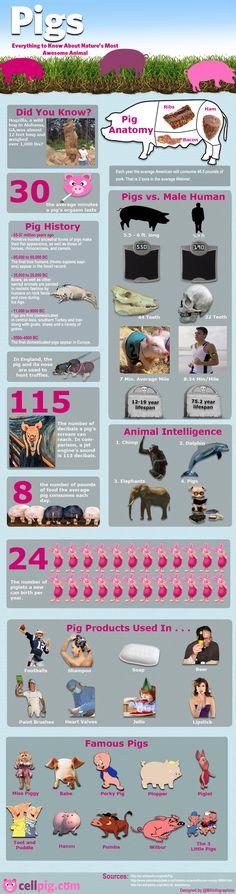 22 best Pet Sitter Directories images on Pinterest | Career change ...