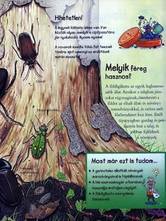 Picasa Webalbumok Bugs And Insects, Montessori, Butterflies, Environment, Science, Education, School, Creative, Picasa