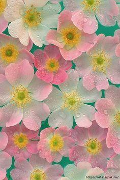 Немного цветов в пасмурный день . Обсуждение на LiveInternet - Российский Сервис Онлайн-Дневников
