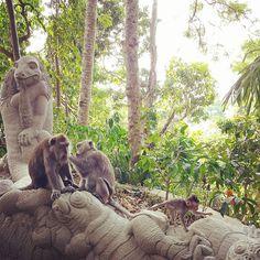 A floresta sagrada dos macacos em Ubud, Bali, é um dos poucos lugares na Ásia que quase não exploram animais (quase porque há 4 ou 5 veadinhos presos dentro do parque e isso não é legal). Se não fosse isso, o lugar merecia nota 10. Muito legal ver tanto macaquinho zanzando pra lá e pra cá, sem dar bola para os visitantes.