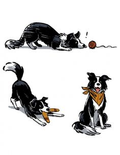 Astounding Border Collie Dog Tips Ideas Border Collie Colors, Border Collie Art, Animal Sketches, Animal Drawings, Drawings Of Dogs, Dog Illustration, Illustrations, Collie Dog, Dog Art