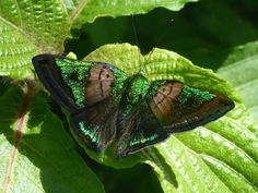 Discovered by blside. Find images and videos about nature, green and butterfly on We Heart It - the app to get lost in what you love. Butterfly Art, Butterfly Photos, Fauna, Beautiful Butterflies, Aphrodite, Caterpillar, Shades Of Green, Art Blog, Wildlife
