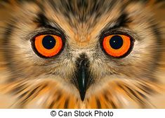 Enhanced owl portrait - Digitally enhanced portrait of an...