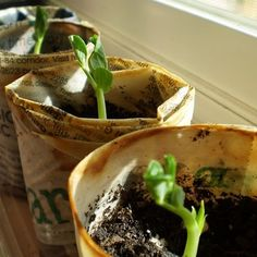 Make biodegradable newsprint pots for your seedlings.