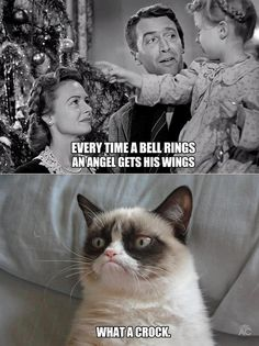 See more 'Grumpy Cat' images on Know Your Meme! Grumpy Cat Images, Grumpy Cat Meme, Grumpy Cat Quotes, Cat Memes, Grumpy Kitty, Grumpy Baby, Cute Cats, Funny Cats, Funny Animals