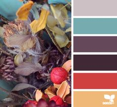 Design Seeds - Website with lots of color palettes! Browse, search by theme, or search by color.