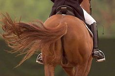 ♞Pinterest ➝ LimitlessSkyy♘ Horse Bridle, Mane N Tail, Horse Hair, Dressage, Beautiful Horses, Equestrian, Model, Red, Animals