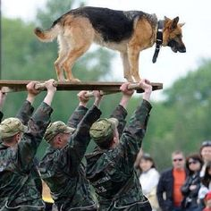 Military Dogs. (If my Zoe were still with us and saw this, she'd want to be carried the same way. LOL)