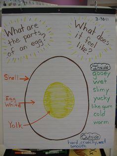 Learn + Play = Pre K: What's inside an egg? Preschool Eggs, Preschool Lesson Plans, Preschool Activities, Reptiles Preschool, April Preschool, Farm Lessons, Lessons For Kids, Kindergarten Science, Kindergarten Worksheets