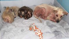 Mother and 3 puppies on kill list after heartless owner said he wanted them dead
