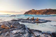 """Quando le spiagge di San Cristobal sono """"affollate"""", sono così. Le isole #Galapagos e la loro ancestrale bellezza"""