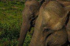 How To Plan A Wildlife Safari At Udawalawe National Park, Sri Lanka https://www.tripoto.com/trip/how-to-plan-a-wildlife-safari-at-udawalawe-national-park-sri-lanka-593568399b92c?source=apin