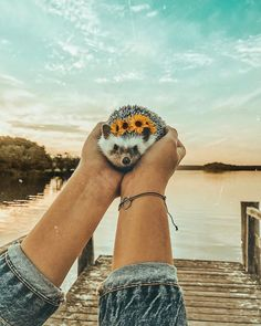 If you're going to San Francisco, be sure to wear some flowers in your hair 🦔🌻🌸🌺 Cute Puppies, Cute Dogs, Cute Babies, Cute Little Animals, Cute Funny Animals, Cute Animal Photos, Cute Pictures, Baby Hedgehog, Tier Fotos