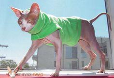 """Sphynx Swag Designer Fleece Cat Shirt/ Sweater """"Lime Sherbet"""""""