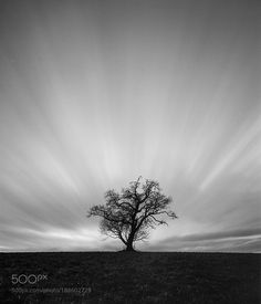 Dark tree by RoliWeana